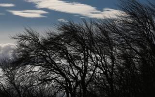 Как использовать стихию ветра в своих целях: магические ритуалы