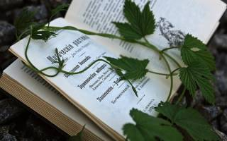 Какие растения обладают магическими свойствами