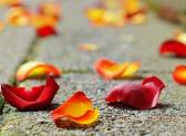 Правила гадания по лепесткам роз: как проводить
