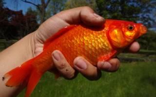 Как определить или навести порчу на рыбу