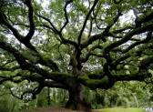 Магические свойства деревьев: таблица покровительства по дате рождения