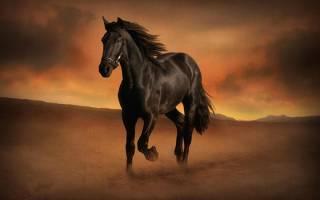 Что значит лошадь, выпавшая в гадании на кофейной гуще