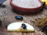 Как избавиться от тараканов: проведение заговора