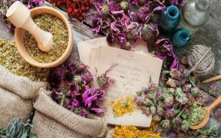 Магические свойства трав: как использовать растения для ворожбы
