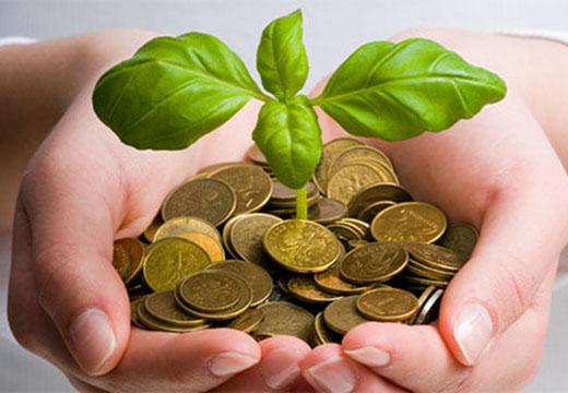 растение растет из монет