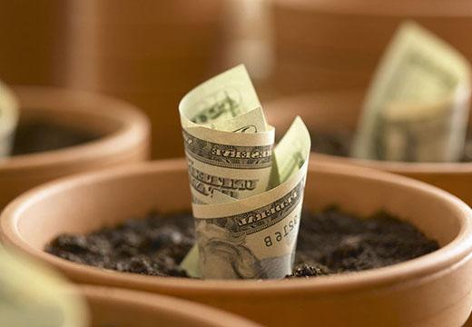 доллар в горшке