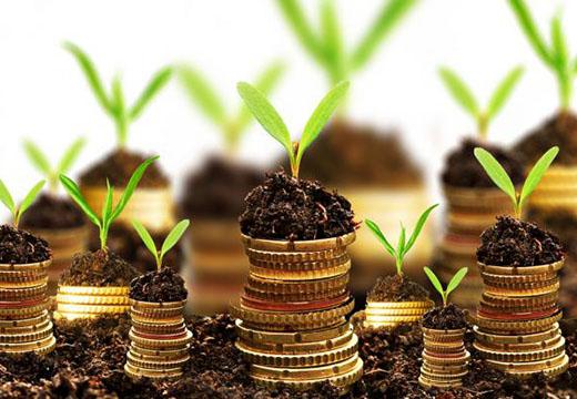 стопки монет и ростки