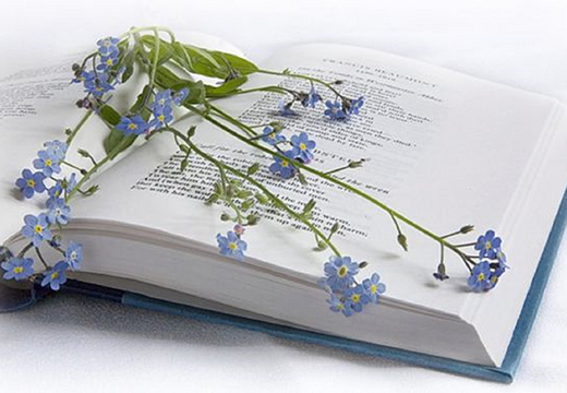 цветы на книге