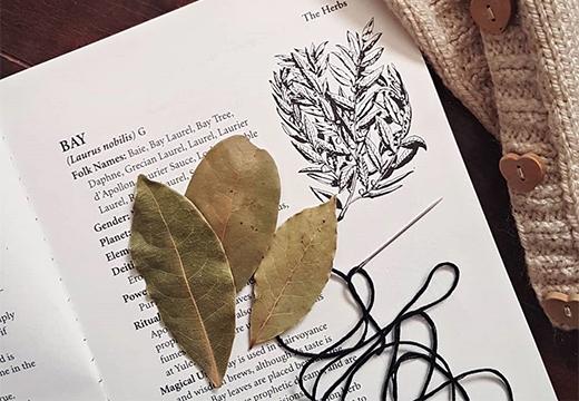 лавровые листья на книге