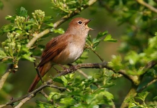 птица утром в лесу