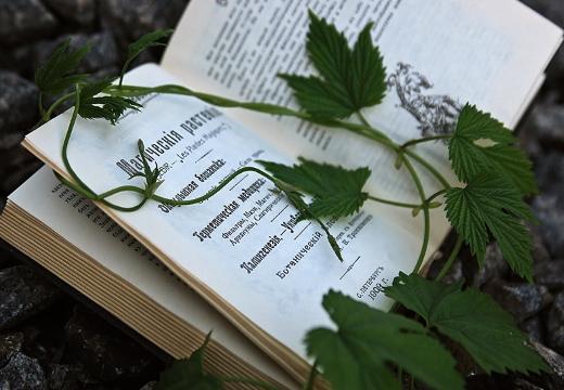 Растения для магии