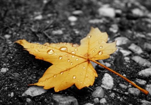 кленовый лист на земле