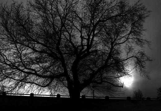 дерево ночью