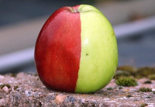 двухцветное яблоко