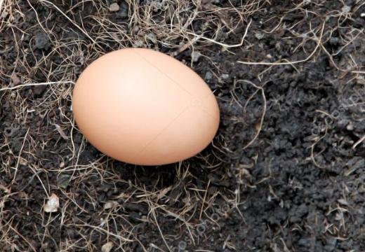 яйцо на земле