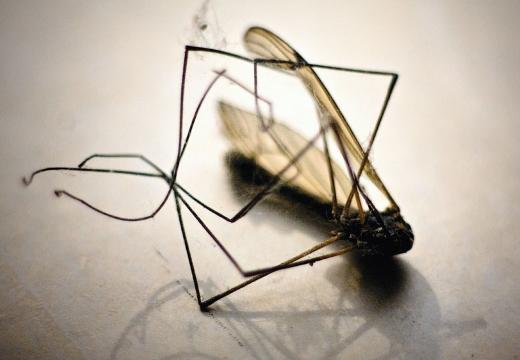 мертвый комар
