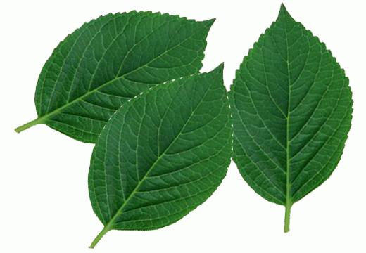Три листка дерева