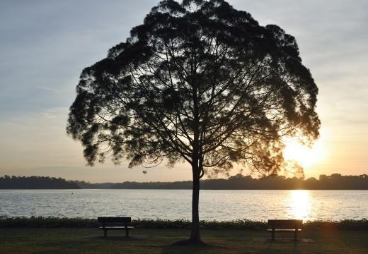 дерево у озера
