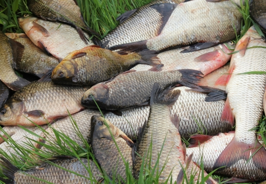 улов рыбалка
