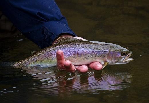 отпускать рыбу в воду