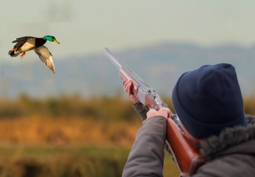 стрелять уток